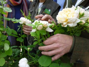 Généreuse, cette rose est parfaite pour le jardin, résiste bien à la pluie et mieux que tout elle exhale un parfum délicieux de thé aux accents de boisée de cèdre et gourmand de vanille.