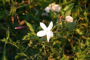 © Fleurs d'exception du Pays de Grasse