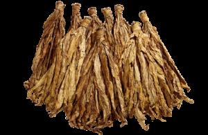feuille-de-tabac-losmothequepng