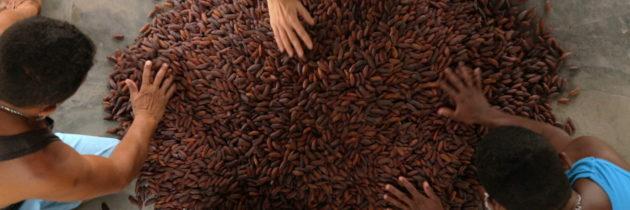 La fève tonka avec Marion Costero