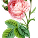 An exhibition dedicated to the Rose at Villa Saint-Hilaire