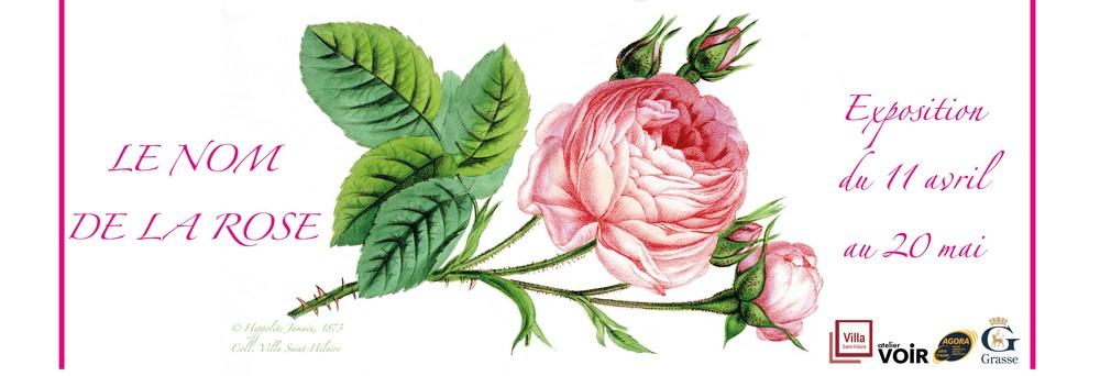 Une exposition dédiée à la Rose à la Bibliothèque St-Hilaire