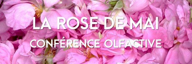 La Rose de Mai ou Centifolia à l'Osmothèque