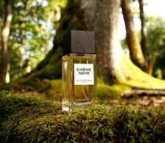 Chêne noir de la Chênaie