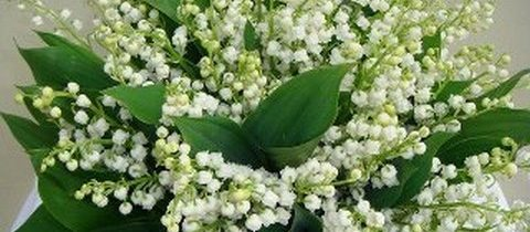 11 fragrances smelling lily of the valley