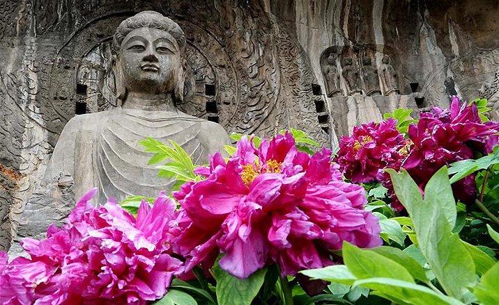Pivoine Suzhou