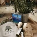 Concours de cueillette d'olives à Postira